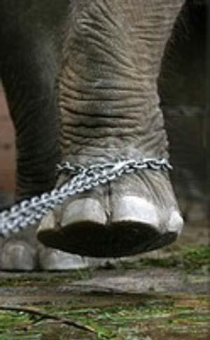 El portero es intocable en su rea for El elefante encadenado